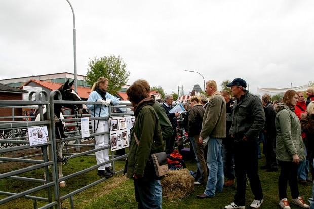 viele-pferdefreunde-auf-dem-bauermarkt