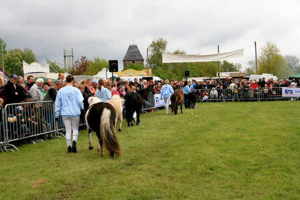 rassenvielfalt-bei-den-pferden