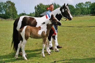 Pferdezucht Historie