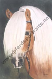Pferde und Tierportraits