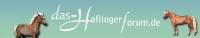 Der Haflinger Das forum